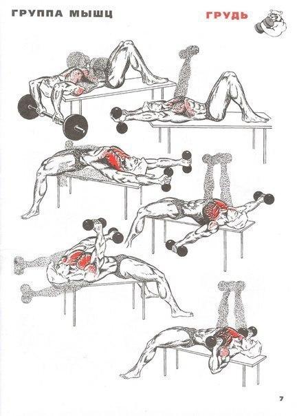 Как накачать грудные мышцы в домашних условиях за 1 день