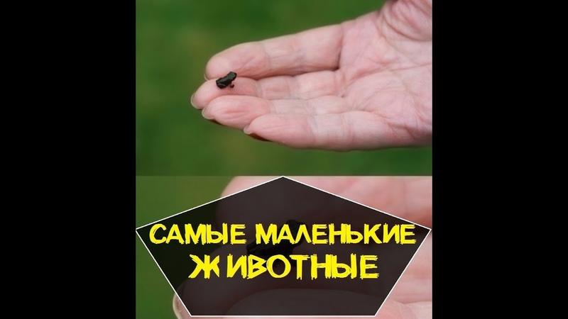 САМЫЕ МАЛЕНЬКИЕ ЖИВОТНЫЕ В МИРЕ И РОССИИ