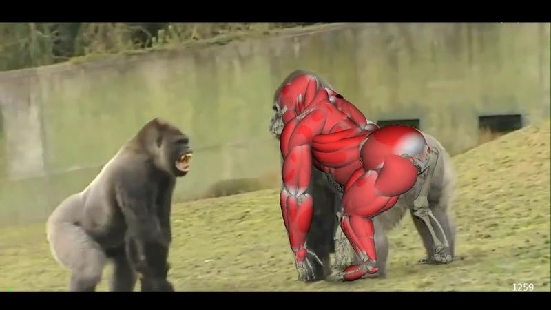 Gorilla Walk And Run
