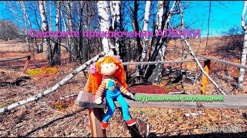 Муравьиная роща АленкаАВ | МультСтудия Академия Волшебников | 89080252490 HD 1080p