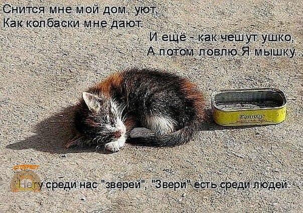 Фото №456248652 со страницы Дианы Слизченко