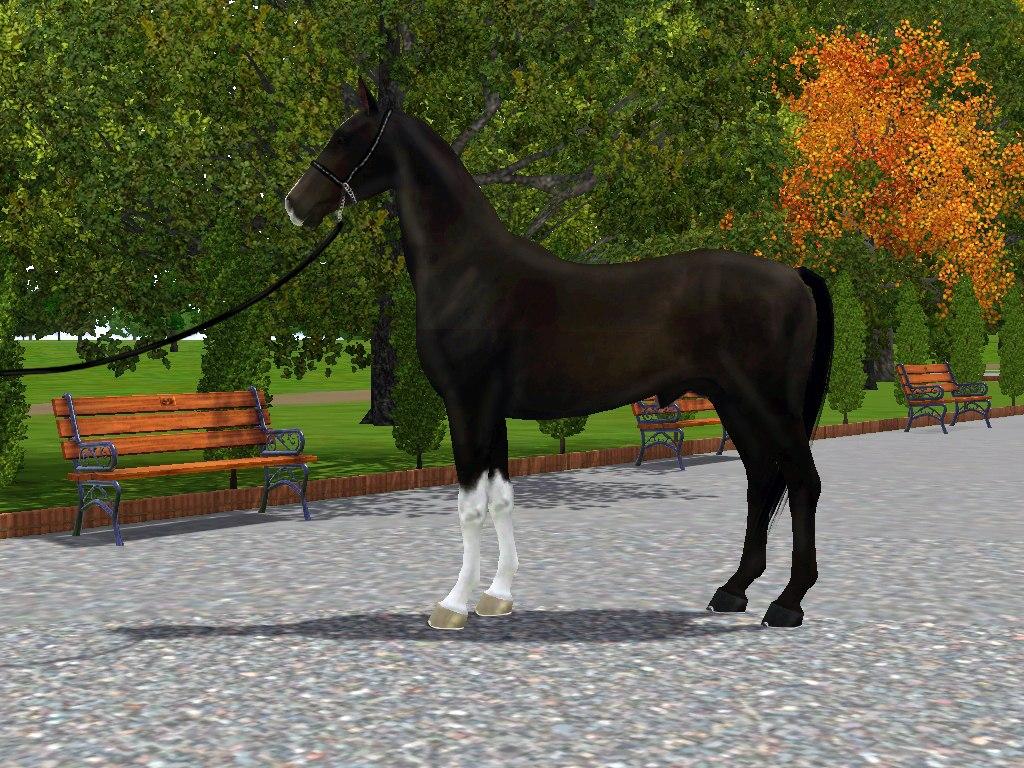 Регистрация лошадей в RHF 1.1 - Страница 5 3Dbt6wgcMGc