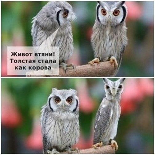 http://cs617931.vk.me/v617931262/1b221/sqlYW9MDXu4.jpg