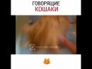 Говорящие кошки)) Смешное видео, гифки, приколы, вайны. Подпишись и подними себе настроение!