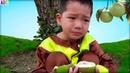 Sự tích cây vú sữa - Bài học cho bé ❤ ABC ❤