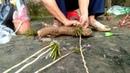 Cách ghép và treo lan Ý ngọc, Phật ngọc và ngọc thạch 3 mày một cách hiệu quả