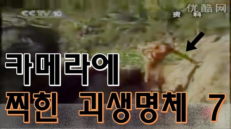 동물이냐 사람이냐 괴물이냐 카메라에 잡힌 정체불명의 괴생명체 7가지