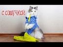Приколы с котами – озвучка животных от Domi show – Смешные коты и кошки