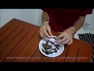 [Шокирующая Азия] Необычный и страшный ужин в Таиланде!