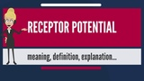 What is RECEPTOR POTENTIAL What does RECEPTOR POTENTIAL mean RECEPTOR POTENTIAL meaning