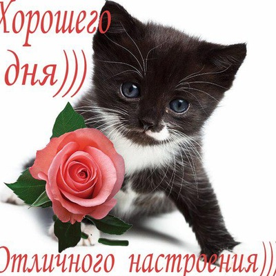 Гелназ Бикбаева, 13 февраля , Москва, id199112401