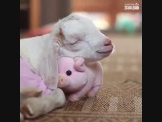 Желаем вам спокойной ночи! 😇