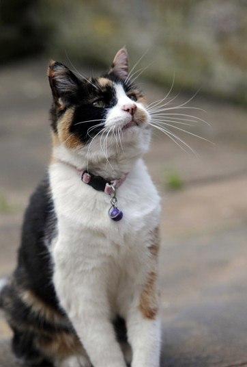 15-летняя кошка Клео