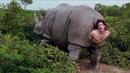 Носорог рожает человека Эйс Вентура 2 Когда зовёт природа 1995