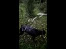 Собачья радость-2! вода!
