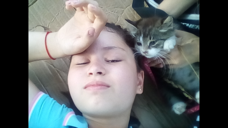 Подробнее об отеле-приюте Дай лапу друг для бездомных 🐈 котят
