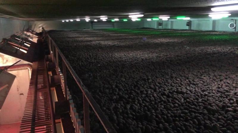 Добронравов Агро, картофель в хранилище, Литовня