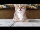 Кот эмоционально смотрит фильм ужасов