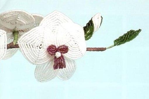 ФотоМК по плетению прекрасной белой орхидеи.  Но ведь мир орхидей на столько разнообразен, что вы можете проявить...