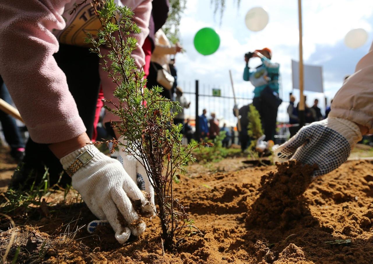 Месяцами мальчика, картинки о посадке деревьев