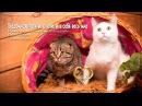 Бездомные котики влюбили в себя интернет 👍❤ ⛄ ❄✨ 🐾 Новогодние истории☺🌲cat lovers