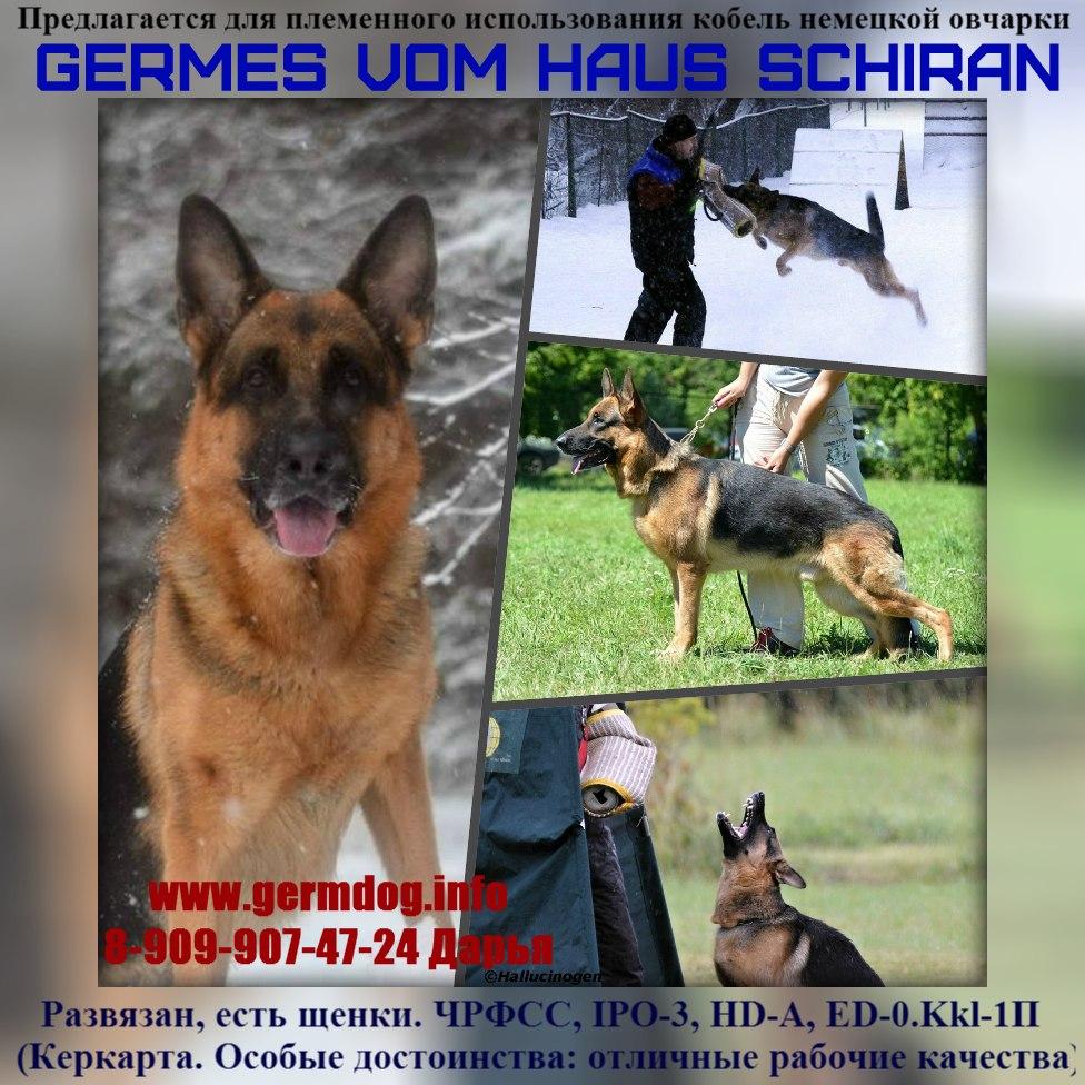 физической клички для собак мальчиков немецкой овчарки основным недостатком