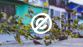 House Skylike - Takeoff  No Copyright Music