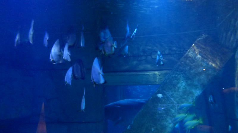 The Lost Chambers Aquarium at Atlantis, The Palm - Dubai (2).