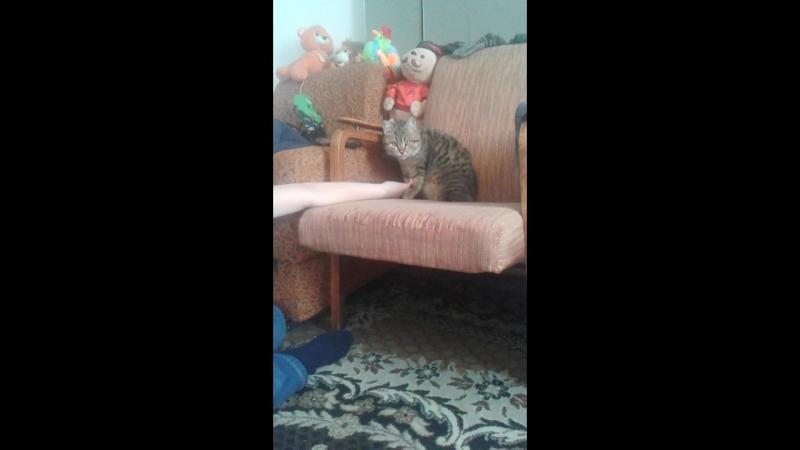 кошка Люська моей тёти
