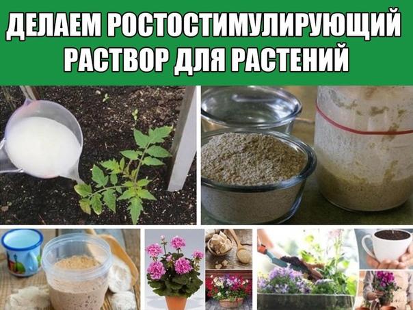 Делаем ростостимулирующий раствор для растений.