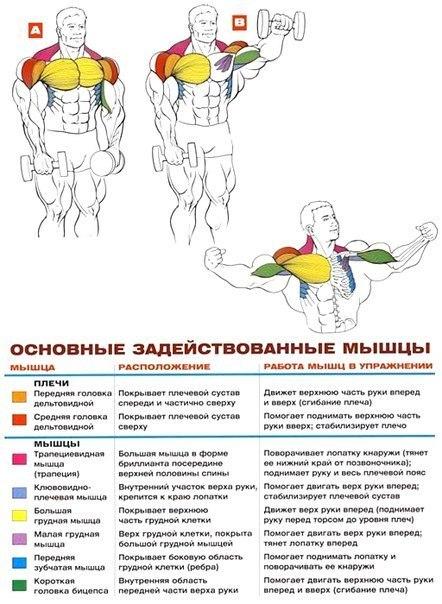 Разведения рук на наклонной