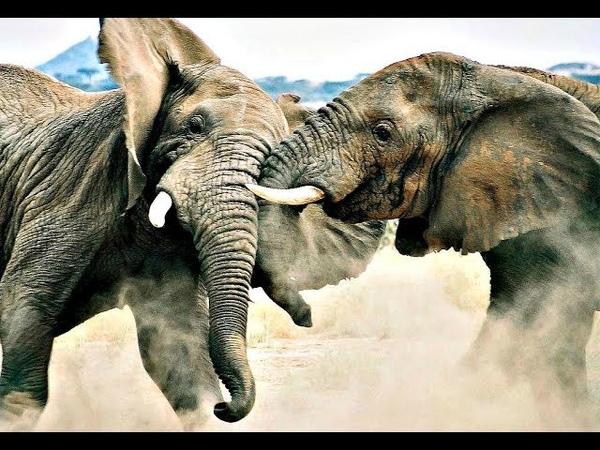 Необычная жизнь животных. Звериные причуды.