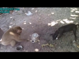TRY NOT TO LAUGH or GRIN_ Funny Monkeys VS Dogs and Cats Compilation 2017 (online-video-cutter.com)