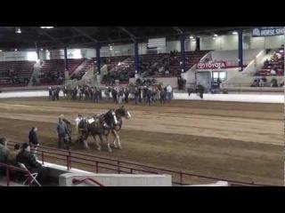 Соревнование лошадей-тяжеловозов \ Annual Spring Pull 2013