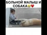 Маленький мальчик с заболеванием синдром Дауна нашел себе друга - собаку.
