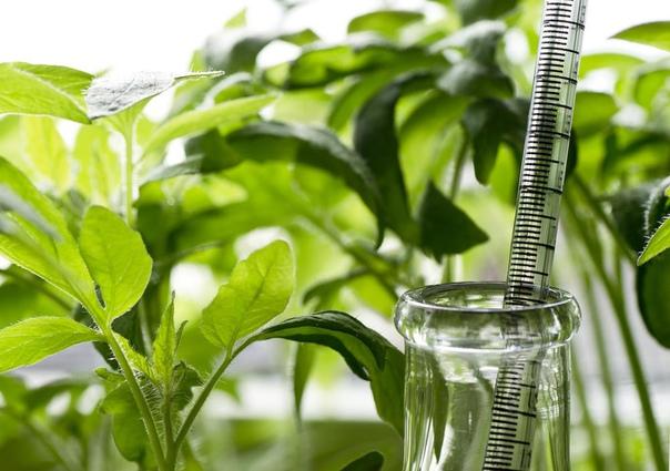 Стимуляторы и регуляторы роста для предпосевной обработки семян Можем ли мы, заботясь о будущем урожае и качестве растений, как-то повлиять на эти факторы еще на стадии подготовки семян к