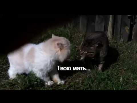 Коты ругаются матом на русском РЖАКА! ОСТОРОЖНО МАТЫ!