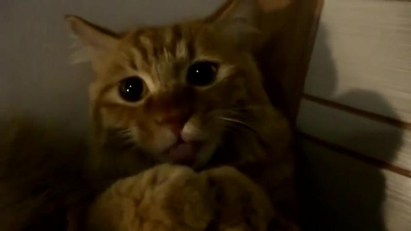 Отнесите в ремонт, кот сломался