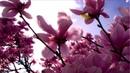 KaNa - Flower of Snow (Shingo Nakamura Remix) [HD 1080p]