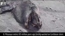 10 Unexplained Alive Alien Ocean Life Forms Exposed By Hurricanes. Never Before Seen Creatures.
