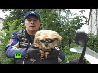 Мотопес Стич: в собачьем байк-клубе появился первый представитель из России