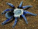 """Оригинал - Схема вышивки  """"Синий паук """" - Схемы автора  """"nicci1985 """" - Вышивка крестом."""