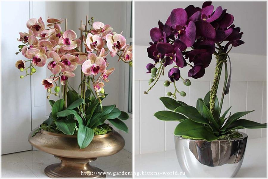 Как и когда пересаживать орхидею