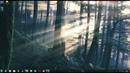 Forest Лес Природа WALLPAPER ENGINE ЖИВОЙ РАБОЧИЙ СТОЛ