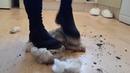 Teddy Bear Stomp Crush - Muddy High Heels Boots Messy Feet