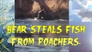 Медведь проверяет рыболовные сети