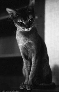 Елена Дрожжина, 4 августа 1983, id16200132