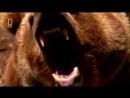 Эволюция Медведь От доисторического хищника до наших дней Супер фильм