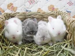 Уход за маленькими крольчатами