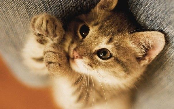 Кот котлет бутерброд кот ты ближе